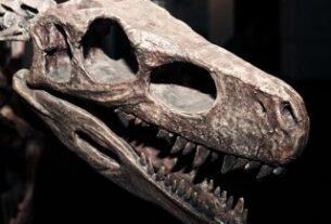 Dinozorların sonu hakkındaki tartışmalarda son tespit